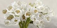 Tulipes Blanches Fine Art Print