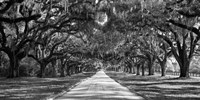 Tree Lined Plantation Entrance,  South Carolina Fine Art Print