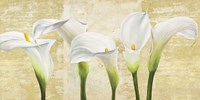Callas on Gold (neutral variation) Fine Art Print