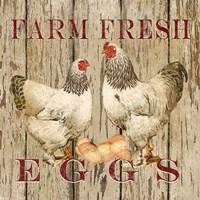 Farm Fresh Eggs II Fine Art Print