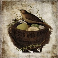 Nest & Eggs Fine Art Print