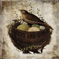 Nest & Eggs Fine Art Print