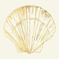 Coastal Breeze Shell Sketches V Fine Art Print