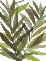 Tropical Greens I Fine Art Print