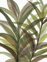 Tropical Greens II Fine Art Print