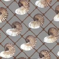 Nautilus Net Fine Art Print