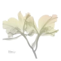 Sunday Morning Orchid Fine Art Print