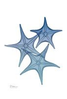 Tidal Starfish 2 Framed Print
