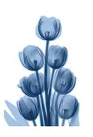 Indigo Spring Tulips Fine Art Print