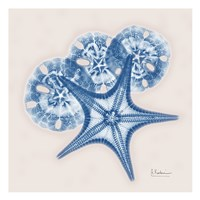 Cerulean Starfish and Sand Dollar Fine Art Print