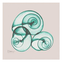 Shamrock Sky Snails Framed Print