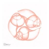 Dry Snail Peach Framed Print