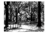 Central Park Walk Fine Art Print