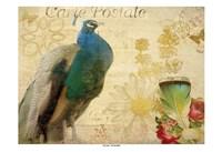 Postcard Peacock Framed Print