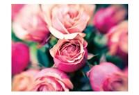 Rosy Blur 1 Framed Print