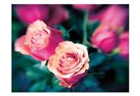 Rosy Blur 2 Framed Print