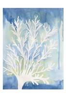 Blue Coral Fine Art Print