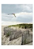 Dawning Seagull and Godbeams Fine Art Print