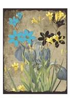 Meadow Bloom Fine Art Print