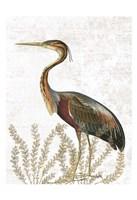 Bird In The Field Fine Art Print