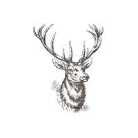 Big Buck 2 Fine Art Print