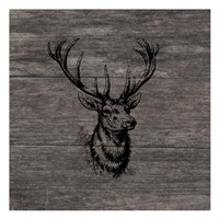 Another Buck Framed Print
