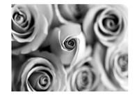 Monotone Bouquet Fine Art Print