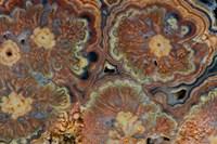 Flowering Tube Onyx, Mexico 1 Fine Art Print