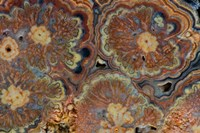 Flowering Tube Onyx, Mexico 1 Fine Art Print