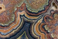 Flowering Tube Onyx, Mexico 2 Fine Art Print
