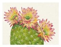 Desert Blossoms I Framed Print