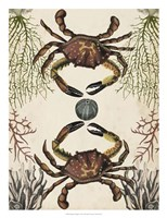 Antiquarian Menagerie - Crab Framed Print