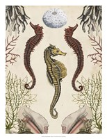 Antiquarian Menagerie - Seahorse Framed Print