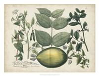 Exotic Weinmann Botanical II Fine Art Print