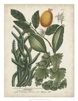 Exotic Weinmann Botanical III Fine Art Print