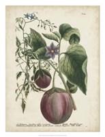 Exotic Weinmann Botanical IV Fine Art Print
