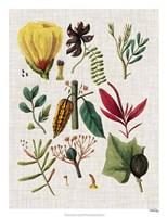 Floral Assemblage I Framed Print