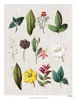 Floral Assemblage II Framed Print