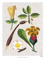Floral Assemblage V Framed Print
