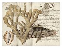Sealife Journal II Framed Print