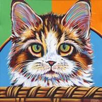 Kitten in Basket II Framed Print