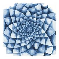 Blue Zinnia Fine Art Print