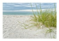 Star Fish and Sea Oats Fine Art Print