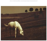The White Horse Fine Art Print