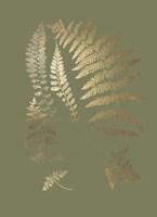 Gold Foil Ferns II on Mid Green - Metallic Foil Fine Art Print