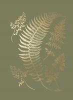 Gold Foil Ferns IV on Mid Green - Metallic Foil Fine Art Print