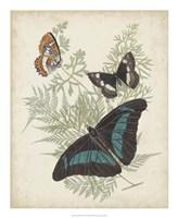 Butterflies & Ferns II Framed Print