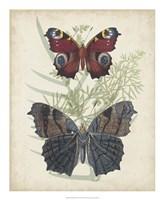 Butterflies & Ferns III Framed Print