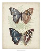 Butterflies & Ferns IV Framed Print