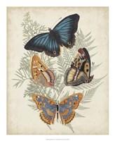 Butterflies & Ferns V Framed Print